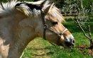 weekend-equestre